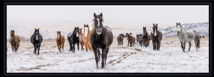 13 : Richard Horst – His Nature, Wildlife, Horse, Landscape & Lifestyle photography business