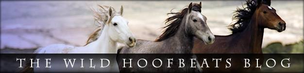 The Wild Hoofbeats Blog
