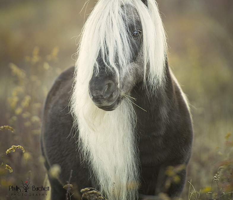 8 : Phyllis Burchett – Fine Art Equine Portraits and Nature Photography – PODCAST
