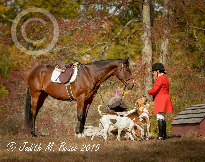 15 : Judy Bosco – Balancing equine photography with work, family, husband & health – PODCAST