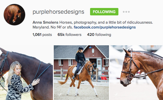 Anna Smolens Purple Horse Design Instagram Account