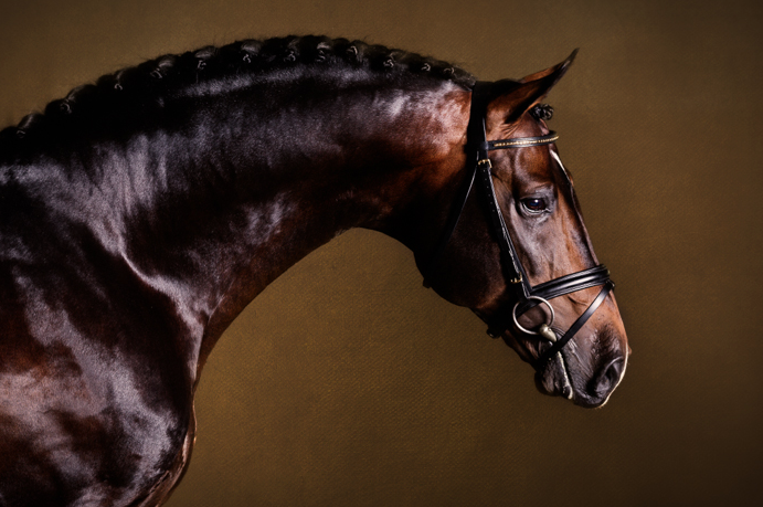 Purple Horse Design - Anna Smolens©