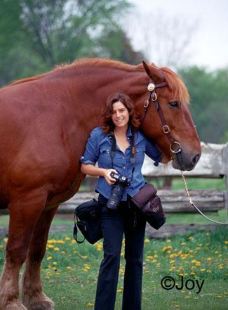 22 : Shawn Hamilton – Editorial and Stock Equine Photographer